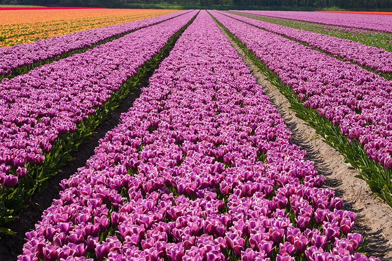 Cees van Vliet - Voorjaar