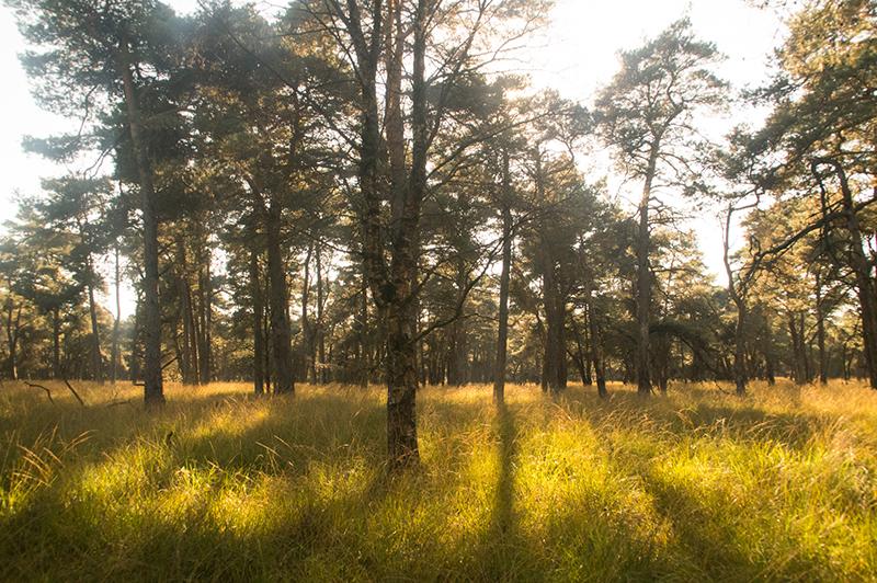 Cees van Vliet - Herfst