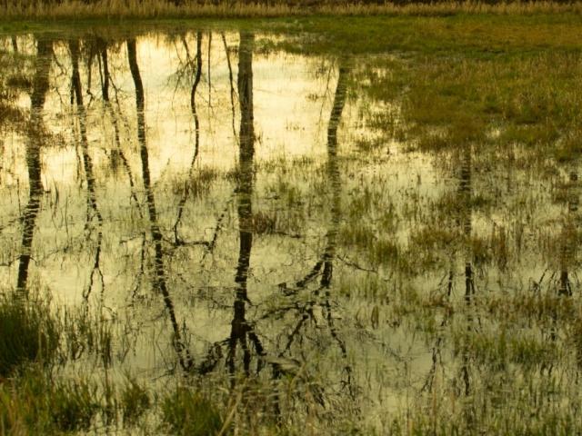 Cees van Vliet - Reflectie
