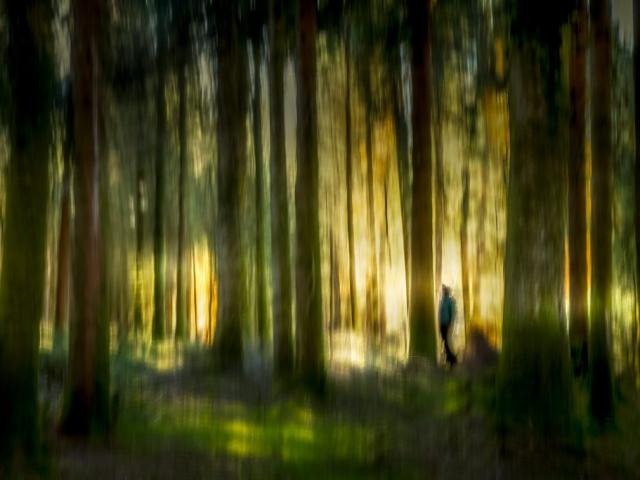 Albertine Boere - Bewogen bos